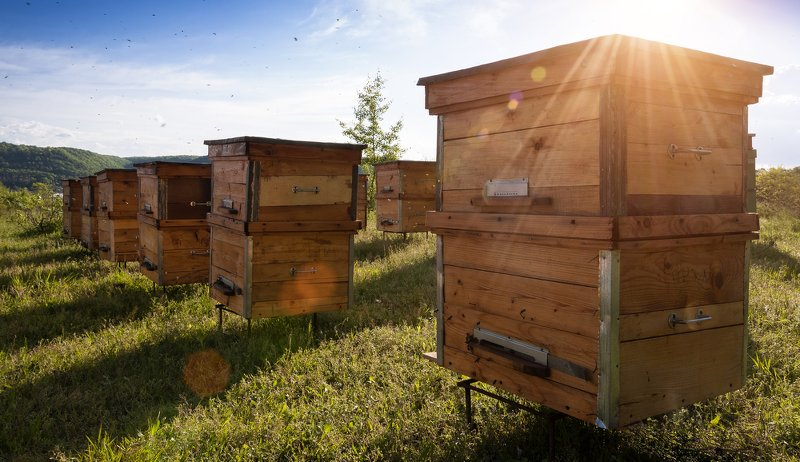 Freebees Host A Hive Beehives